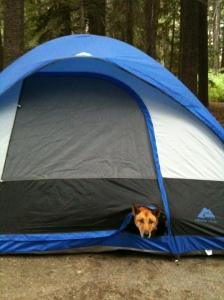 Jackboy Camping